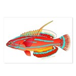 McCoskers flasher wrasse Postcards (Package of 8)