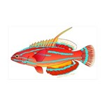McCoskers flasher wrasse Wall Decal