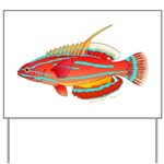 McCoskers flasher wrasse Yard Sign