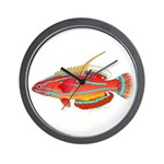 McCoskers flasher wrasse Wall Clock