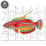McCoskers flasher wrasse Puzzle