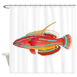 McCoskers flasher wrasse Shower Curtain