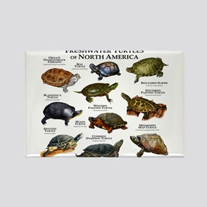 Freshwater Turtle of North Americ Rectangle Magnet