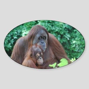 Orangutan Mom with a Baby Sticker (Oval)