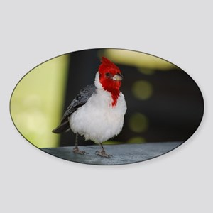Red Crested Cardinal Sticker (Oval)