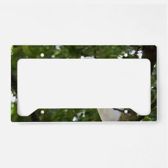 White Egret Bird in a Tree License Plate Holder
