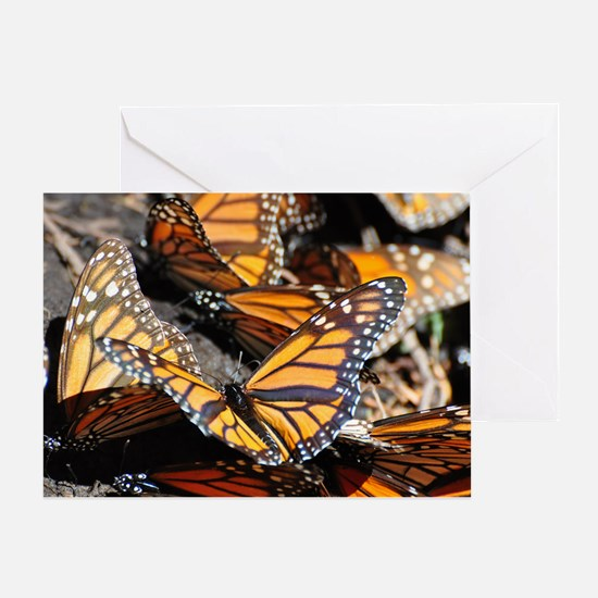 Monarch Butterflies 1 Greeting Cards