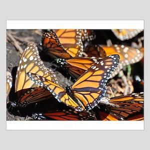 Monarch Butterflies 1 Posters