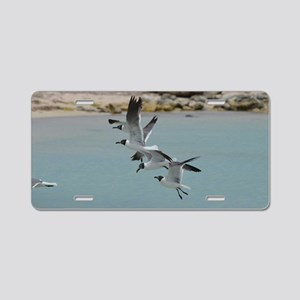 Flying Laughing Gulls Aluminum License Plate