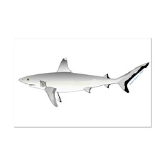 Grey Blacktail Reef Shark Posters