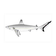 Grey Blacktail Reef Shark Wall Decal