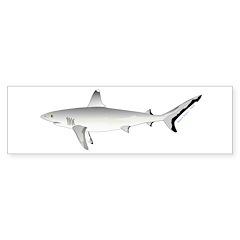 Grey Blacktail Reef Shark Bumper Bumper Sticker