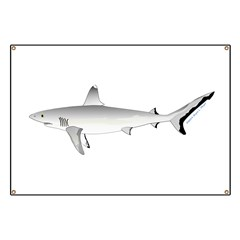 Grey Blacktail Reef Shark Banner