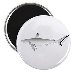 Grey Blacktail Reef Shark Magnets