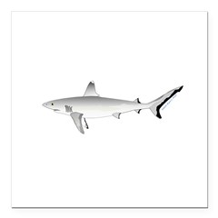 Grey Blacktail Reef Shark Square Car Magnet 3