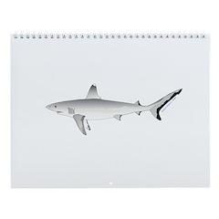 Shark Wall Calendar 8 Wall Calendar