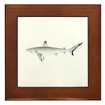 Grey Blacktail Reef Shark Framed Tile