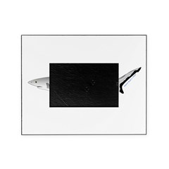 Grey Blacktail Reef Shark Picture Frame