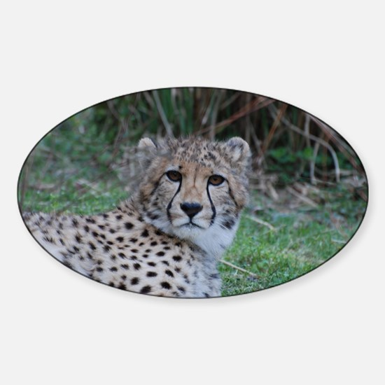 Sleepy Cheetah Cat Sticker (Oval)