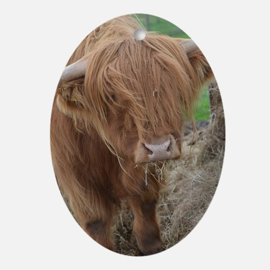 Young Highland Cow Oval Ornament