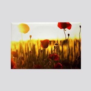 Wonderful Sunset Rectangle Magnet