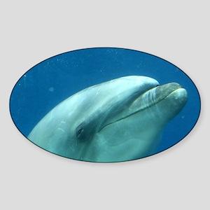 Smug Dolphin Mug Sticker (Oval)