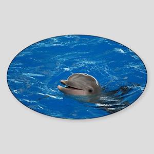 Dolphin Love Sticker (Oval)