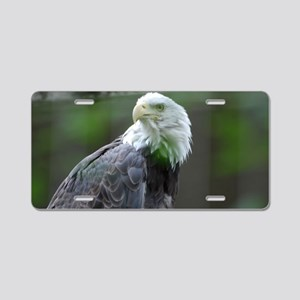 Bald Eagle Glancing Over Hi Aluminum License Plate