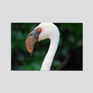 Pink Lesser Flamingo Rectangle Magnet