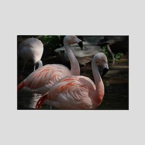 Pair of Flamingos Rectangle Magnet