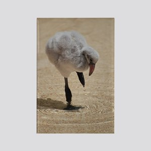 Baby Flamingo Playing in Shallow  Rectangle Magnet