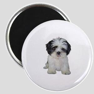 Shih Tzu (bw) pup Magnet