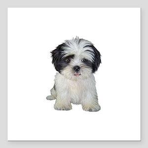 "Shih Tzu (bw) pup Square Car Magnet 3"" x 3"""