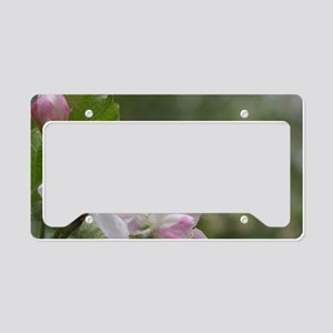 Honey Bee on Pink Apple Bloss License Plate Holder