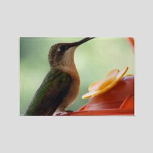 Hummingbird Nectar Rectangle Magnet