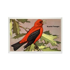 Scarlet Tanager Bird Rectangle Magnet