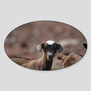 Adorable Baby Goat Sticker (Oval)