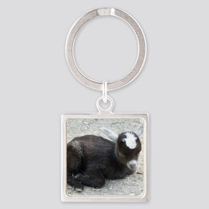 Curled Up Baby Goat Square Keychain