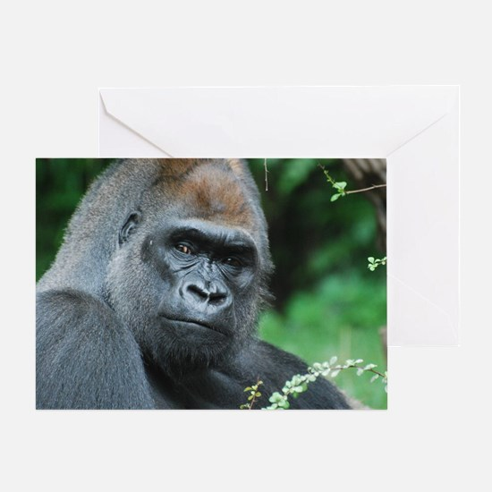 Gorilla Gaze Greeting Card