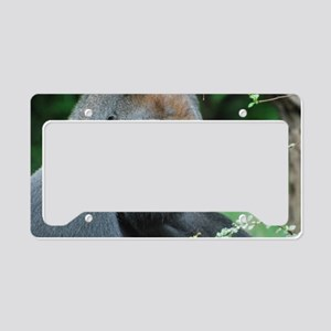 Gorilla Gaze License Plate Holder