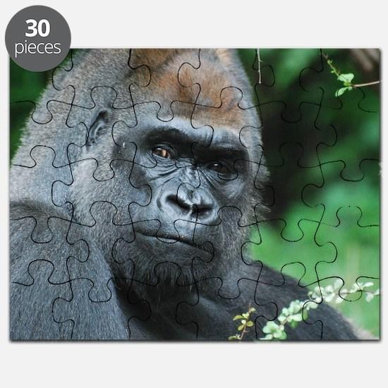 Gorilla Gaze Puzzle