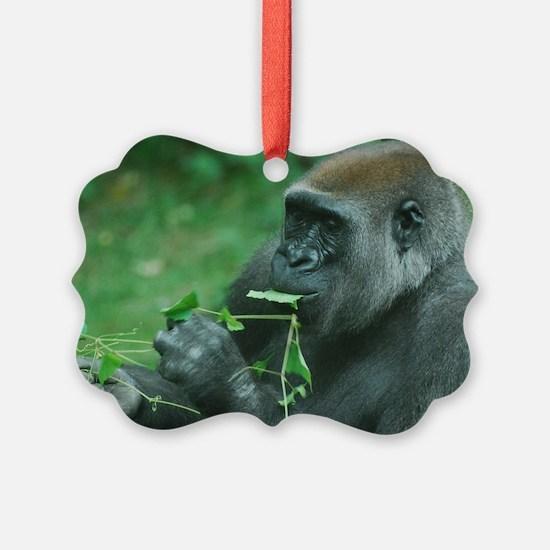 Silverback Gorilla Snacking Ornament