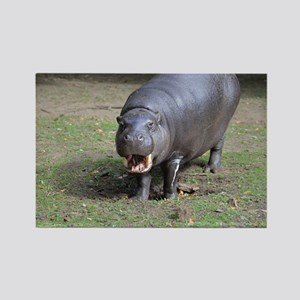Pygmy Hippo Rectangle Magnet