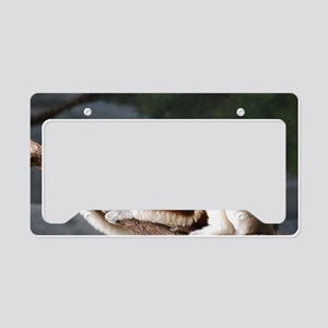 Lemur Hanging Out License Plate Holder