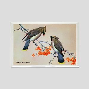 Cedar Waxwing Bird Rectangle Magnet