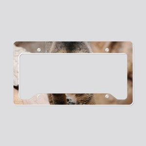 Climbing Collared Brown Lemur License Plate Holder