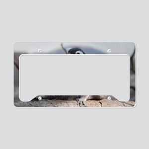 Ringtailed Lemur Doing Yoga License Plate Holder