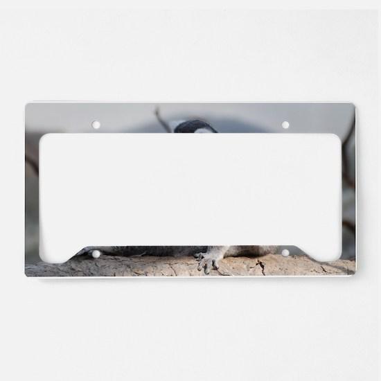 Ringtailed Lemur Doing Yoga License Plate Holder