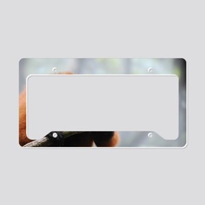 Sharp Toothed Red Ruffed Lemu License Plate Holder