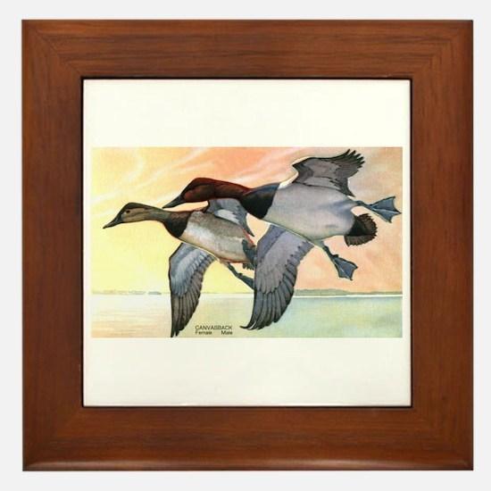 Canvasback Duck Framed Tile